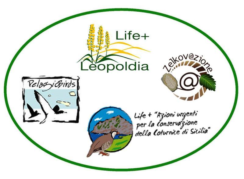 leopoldia life+