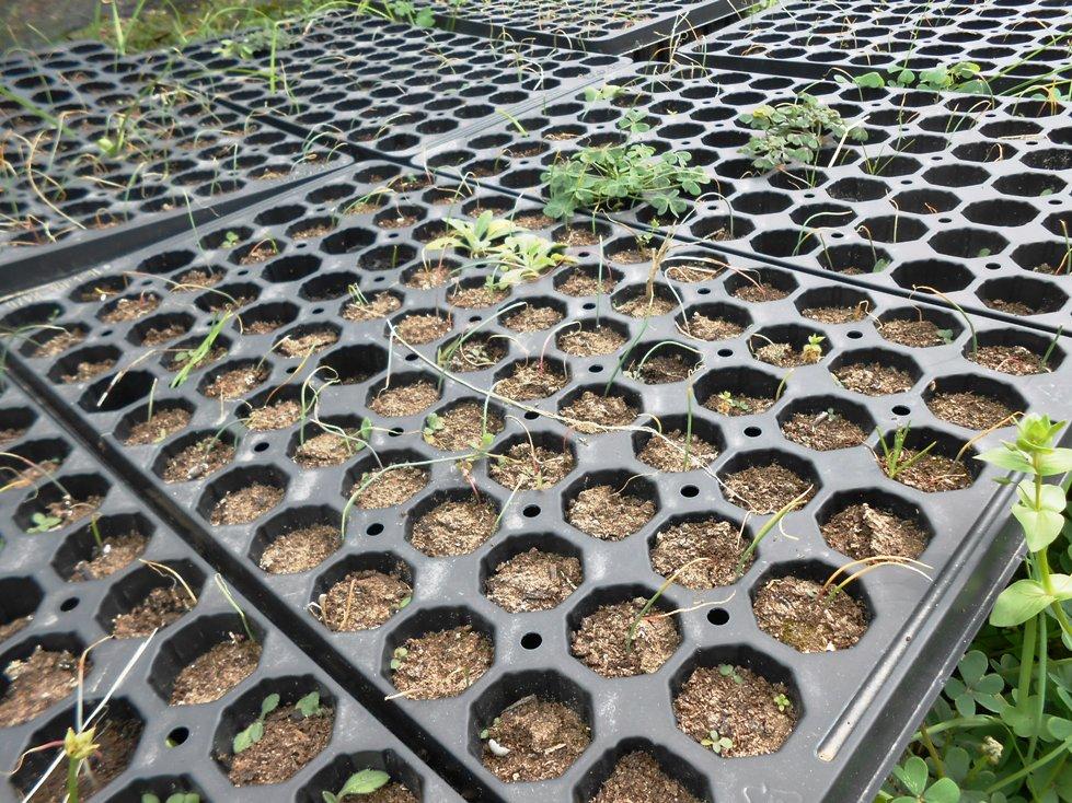 Vivaio Forestale Sicilia : 60.000 piante riprodotte al vivaio di randello rischiano di essere